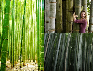 How to Start a Own Bamboo Plantation Business