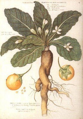 The Secrets of Spices: A Compendium of Botanical and ...
