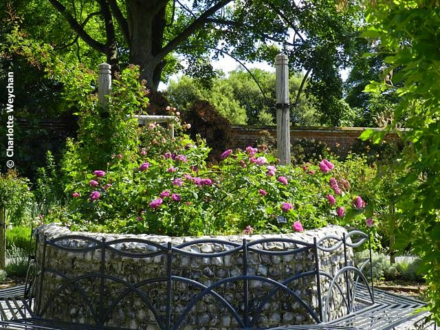 See some of the best roses in Britain at Mottisfont Abbey | The ...
