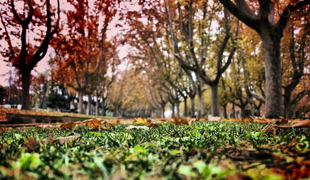 ... Y caen las hojas, llega ....¡¡¡ EL Otoño !!! - Página 8 2012.+Hojas+de+oto%C3%B1o+-+copia+-+copia