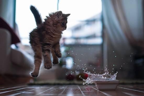 anak-kucing-melompat