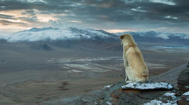Imagen del día: El perro vagabundo del Himalaya