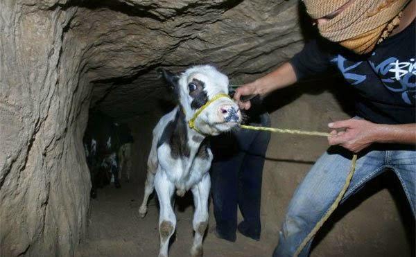 Tentara junta Mesir menghancurkan 22 terowongan rakyat Palestina di perbatasan Gaza