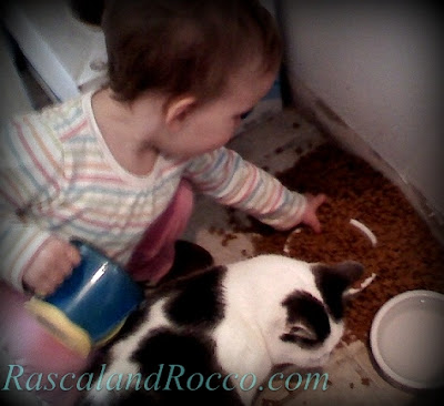 toddler girl kid feeding cat too much