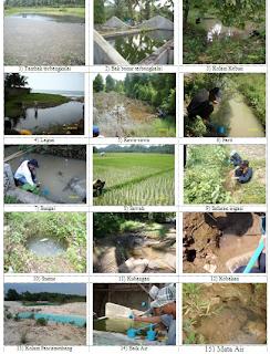 Habitat Vektor Malaria