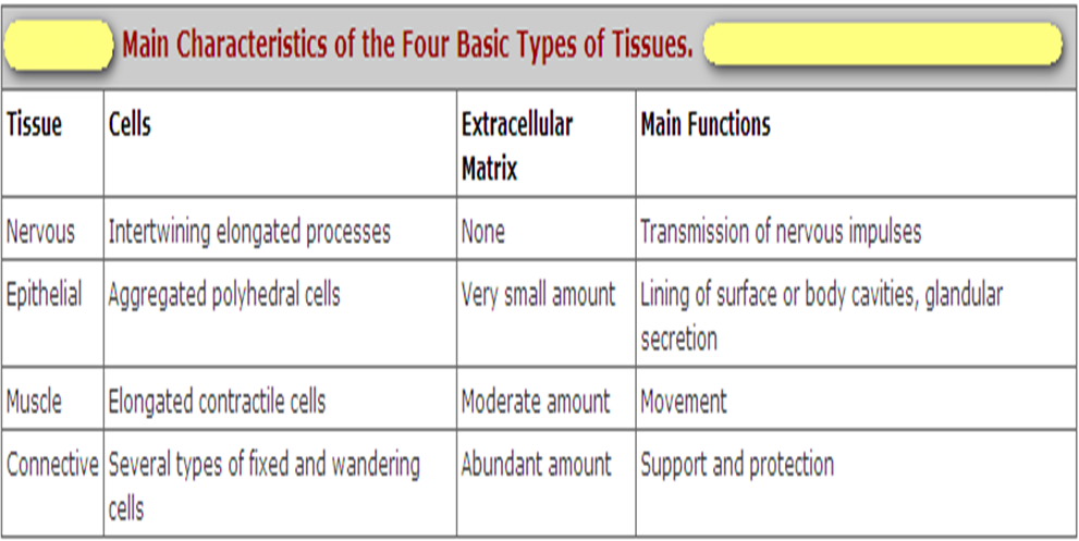 four main types of tissue 2 there are four main types of tissues: epithelial covers body surfaces and lines  inner ______ connective binds and ______ body parts muscular.