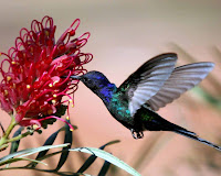 Hummingbird Photo and Picture 20