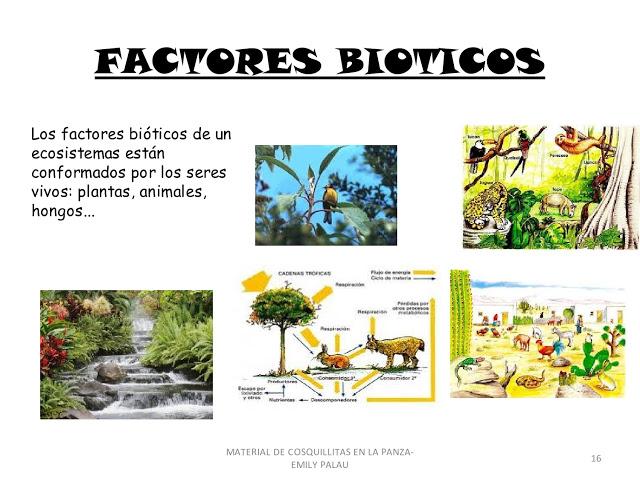 Ciencias naturales los ecosistemas for Que elementos conforman el suelo
