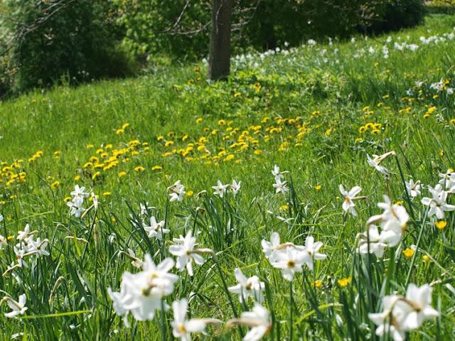 Bæredygtige parker i Rudersdal Kommune