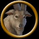 Pathfinder Goat