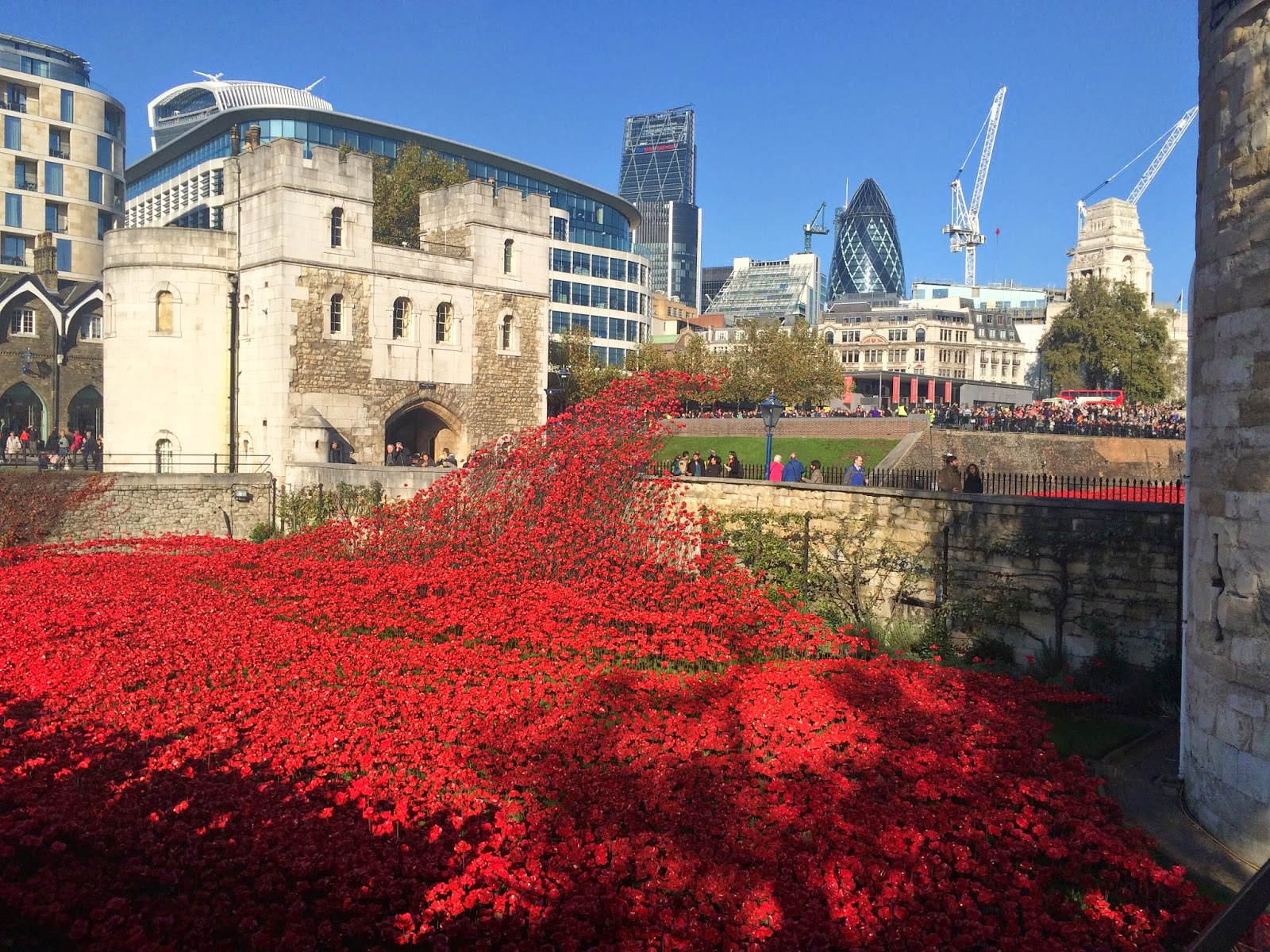 Poppies, land art, garden design, London, tower of London, landscape