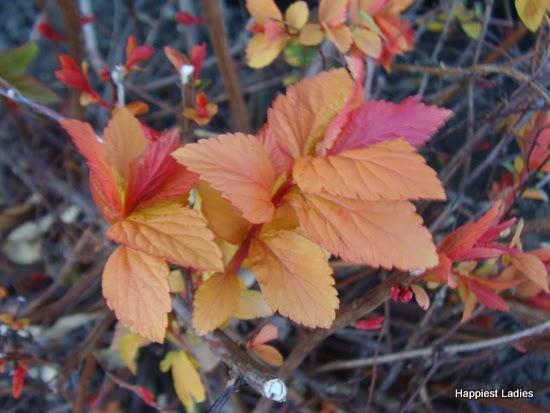 spring leaves 3