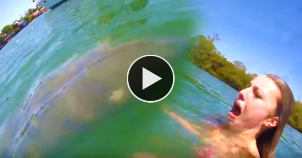 Girl freaks out when a manatee was spotted swimming near her!