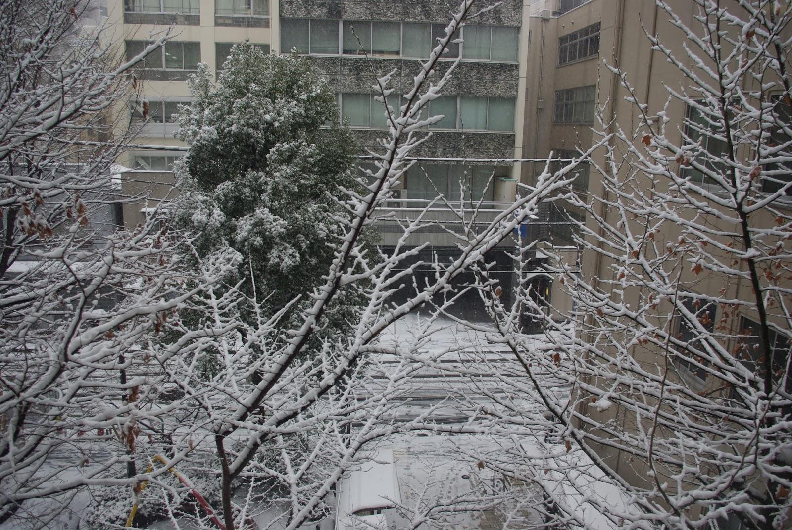 2/8に降った雪の写真です。