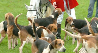 Hunting dogs 'attacking domestic pets during hunts' - report