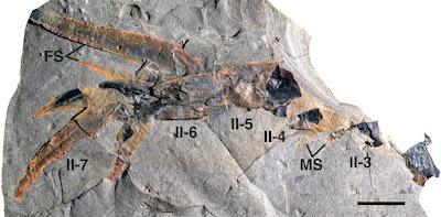 Kalajengking Laut Prasejarah Ditemukan di Iowa