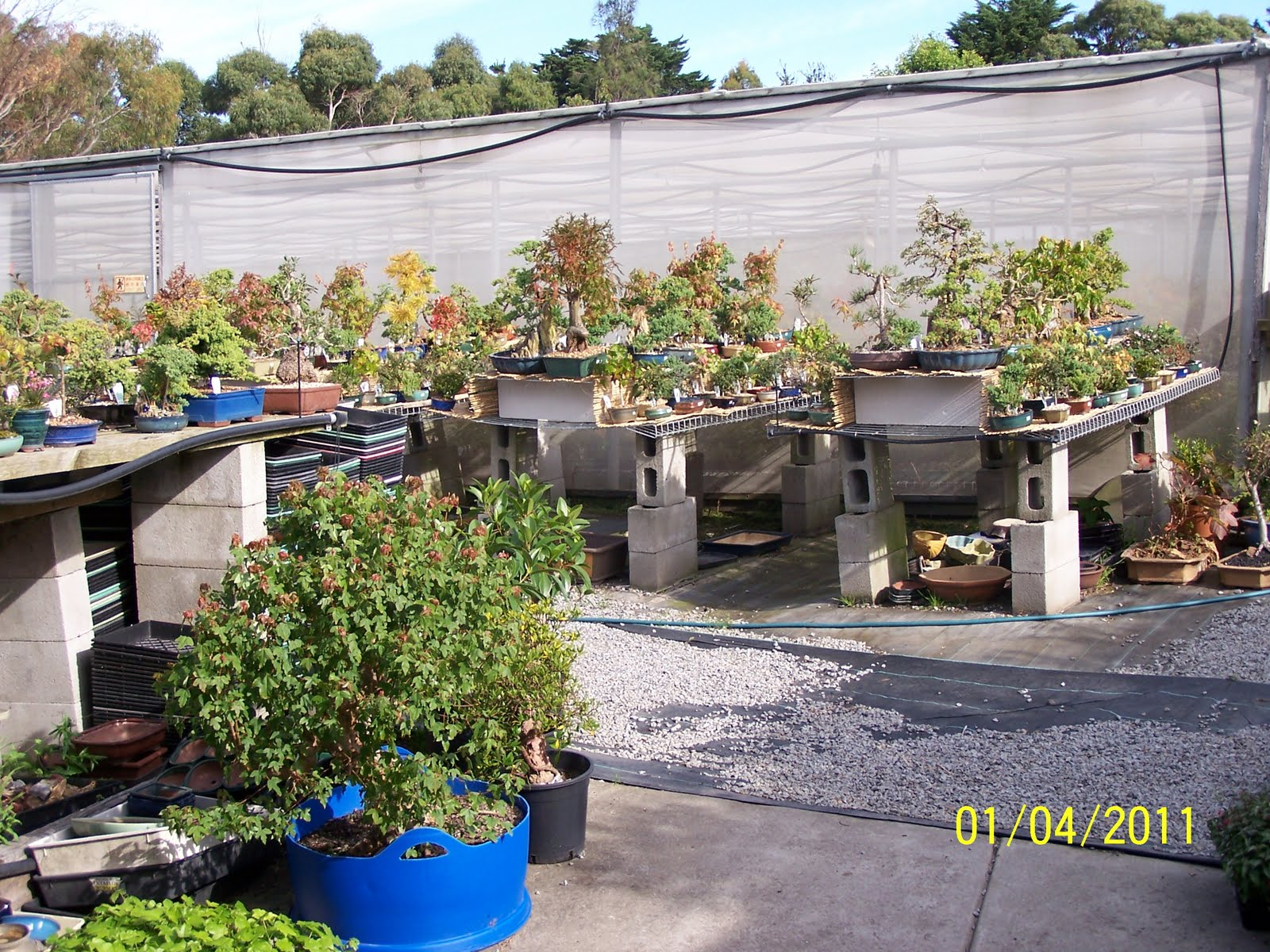 Bonsai Sensation Nursery
