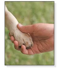 how to teach your dog to shake your hand