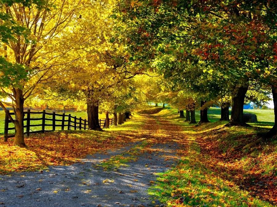 Φθινόπωρο, μια εποχή που φέρνει την ελπίδα!