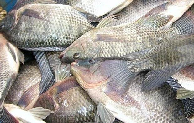 Doa Mancing Ikan Ampuh agar Dapat Banyak