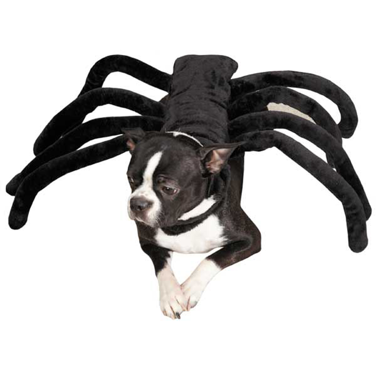 Pet Halloween Costumes For Small Dogs Pet Halloween Costumes Spider