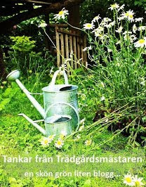 ZONINDELNING SVENSKA BLOGGARE MED GRN INSPIRATION...EN GARDEN LOVERS CLUB