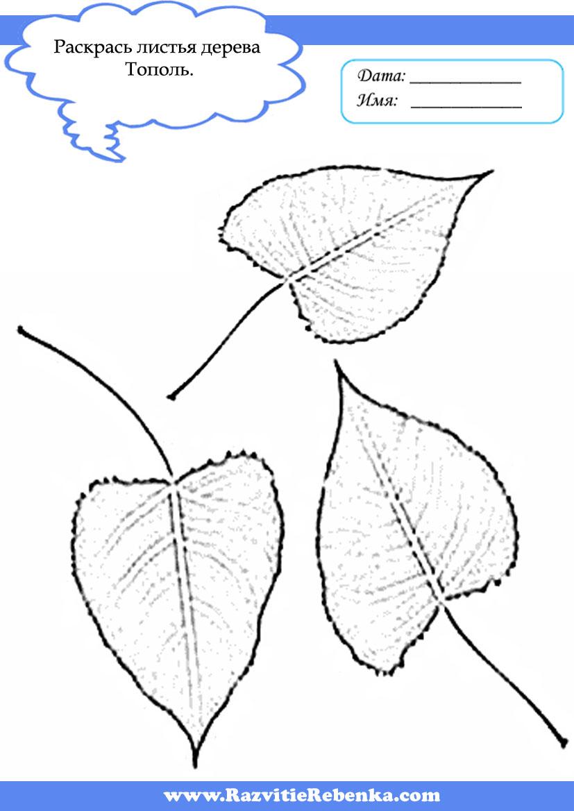 Картинки для дошкольников на тему деревья весной