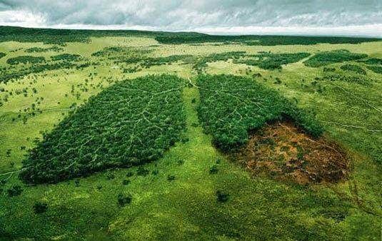 ONF et gestion durable des forêts ?