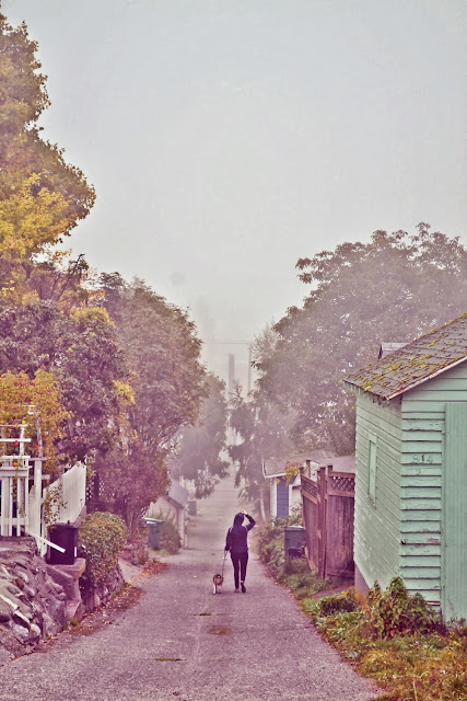 fall, leaves, fog