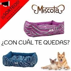 SORTEO MISCOTA ESPAÑA