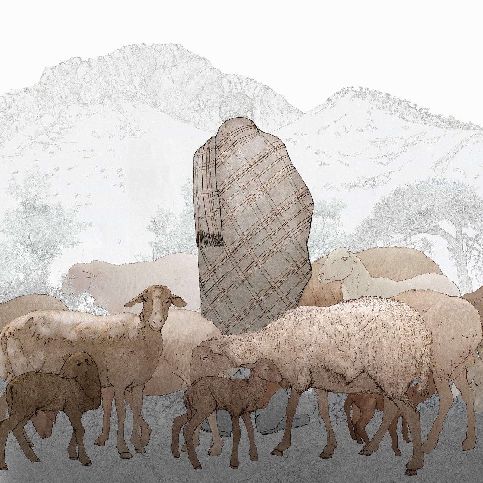 Vall de Albaida, ovejas guirra, pastor , manta., dibujo