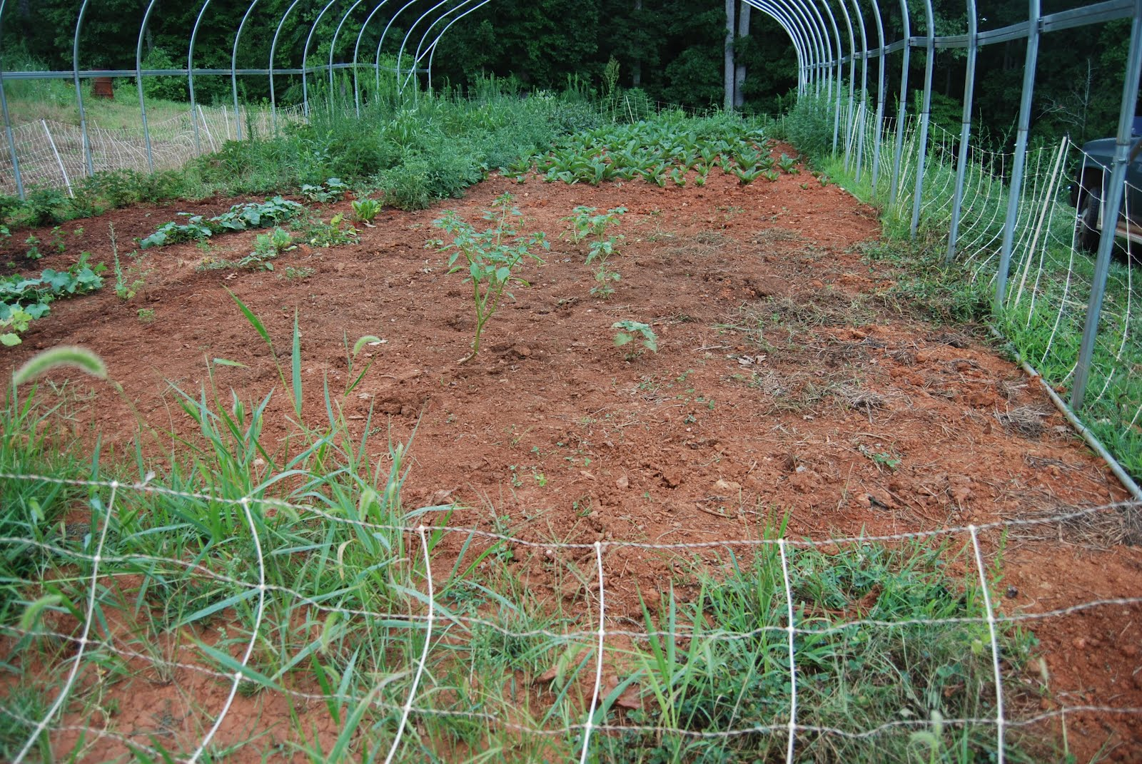 virginiaisforlykoshes: Could a Garden Come Up from This Ground?