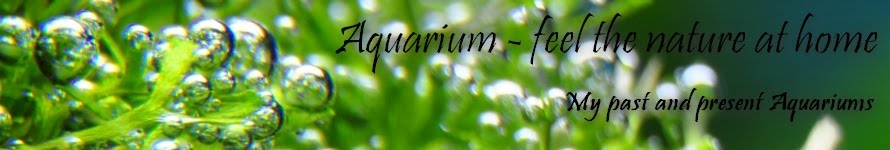 Aquarium - feel the nature at home