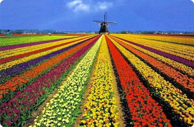 Вышивка тюльпан в поле