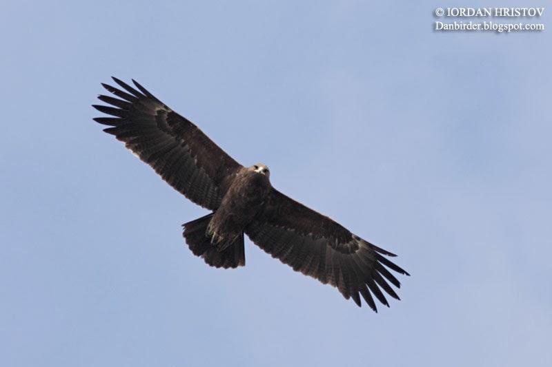 birdwatching in Bulgaria