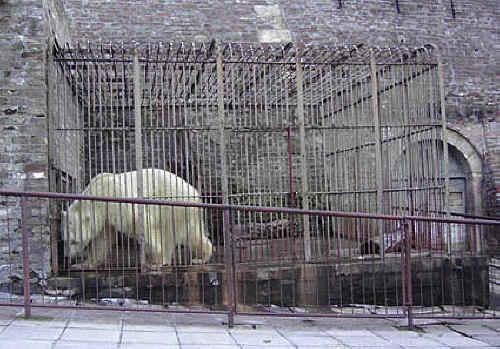Persuasive Essays Animal Cruelty