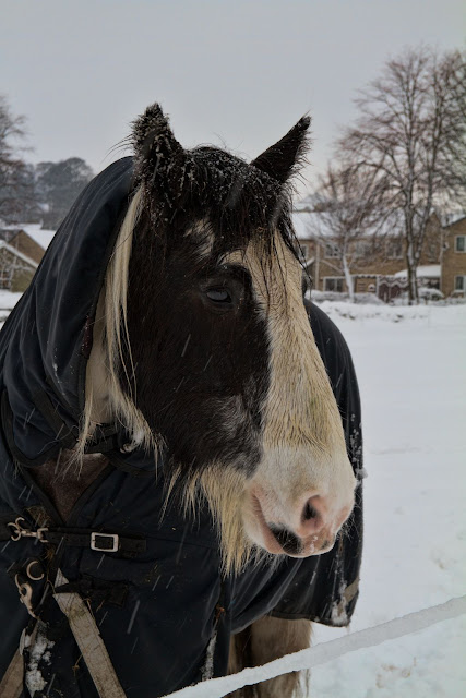 Sad Horse in the Snow