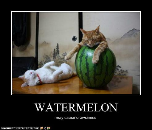 Picture Of Cat With Water Melon