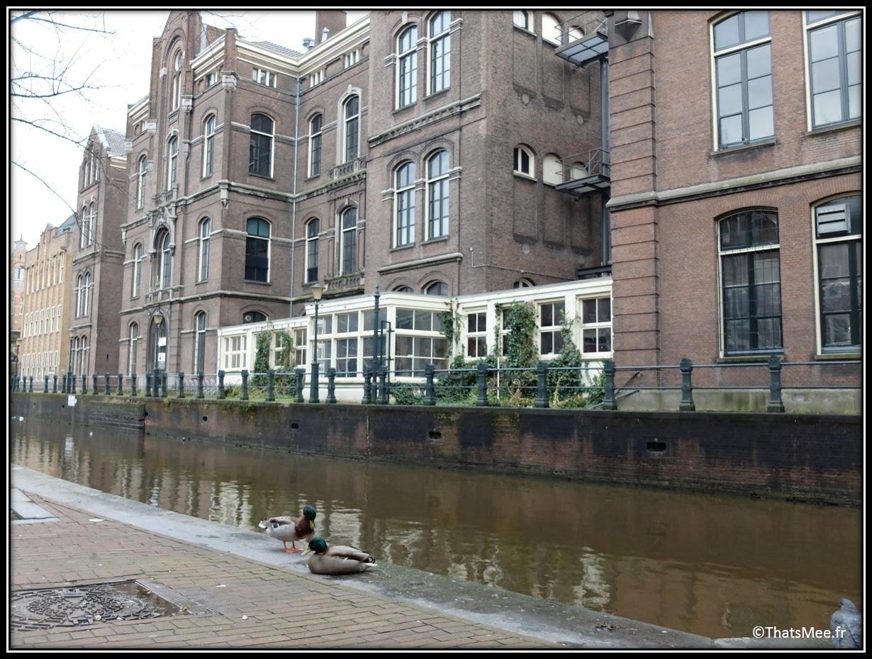 Amsterdam ballade centre ville