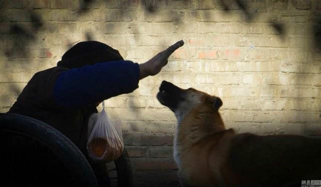 Kisah Inspirasi Kesetiaan Anjing Kepada Tukang Sol yang Lumpuh