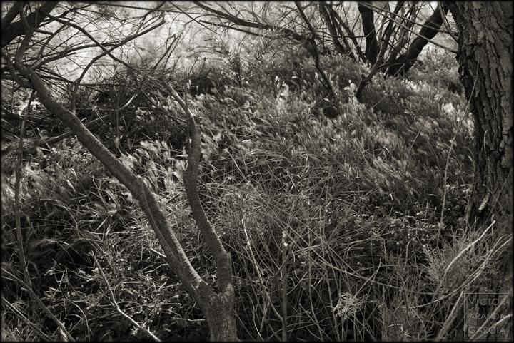naturaleza valencia el_saler fotografia blanco_y_negro