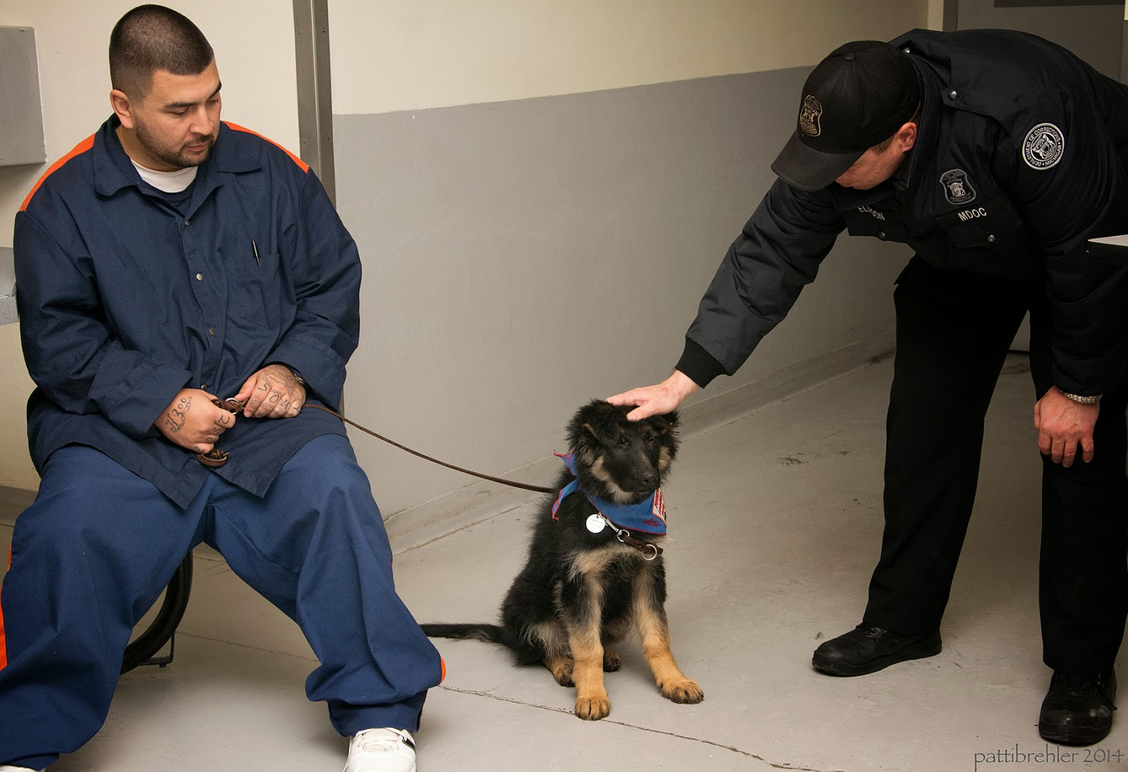 A young man dressed in the blue prison uniform (with orange stripes on the shoulders and legs) is sitting on the left side, holding the leash of a small german shepherd puppy. A guard dressed in black is leaning over the puppy on the right side, his right hand is petting the puppy on its head.