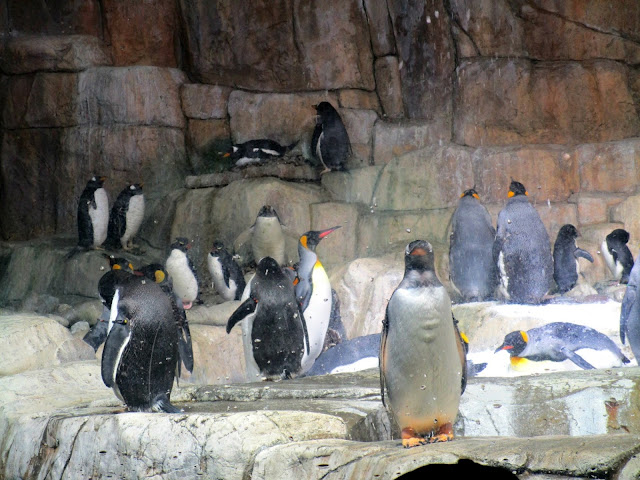A Trip to the Zoo | A trip to the Henry Doorly Zoo in Omaha, Nebraska from Courtney's Little Things