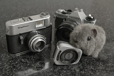 Shane Wombat and Cameras
