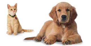 Purina Busy With Beggin Dog Treats