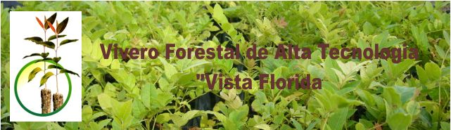 Vivero forestal de alta tecnologia for Proyecto productivo de vivero forestal
