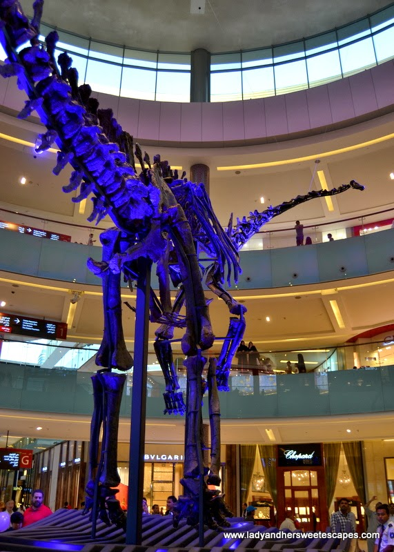skeleton of a young female dinosaur at The Dubai Mall