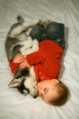 See more Husky puppy http://cutepuppyanddog.blogspot.com/