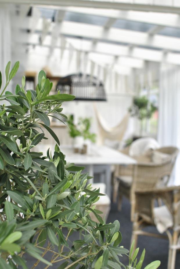 hannashantverk.blogspot.se olivträd