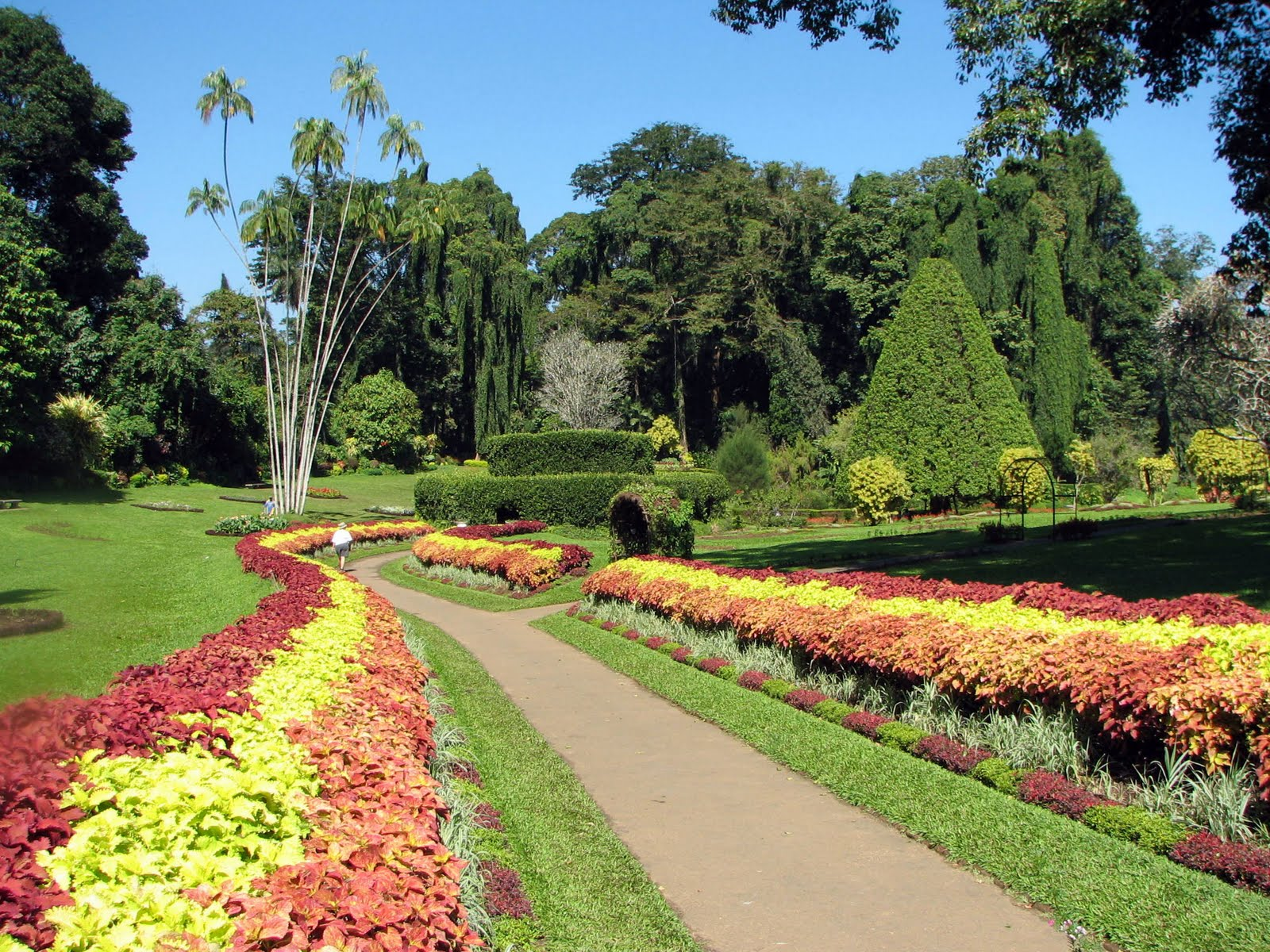 Sri lankan beauty peradeniya botanical garden for Jardin 4 epices